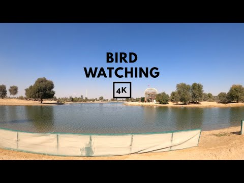 Bird watching at Al Marmoom Desert Conservation Reserve – Dubai – 4K ASMR