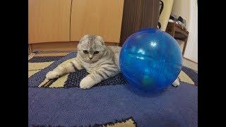 Игры с Кошкой 😻 Скоттиш фолд Кошка Хлоя и Стеклянный Шар 🐱 Игрушки для котов и кошек Kitten Cat