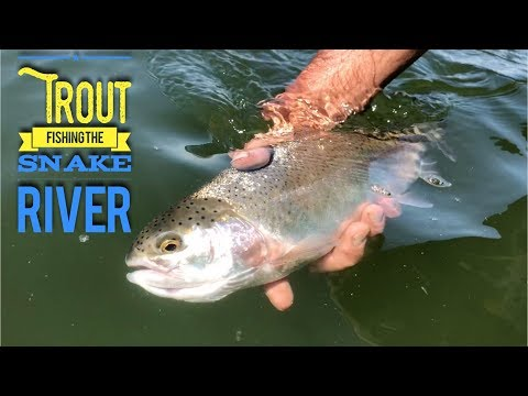 Trout Fishing The Snake River