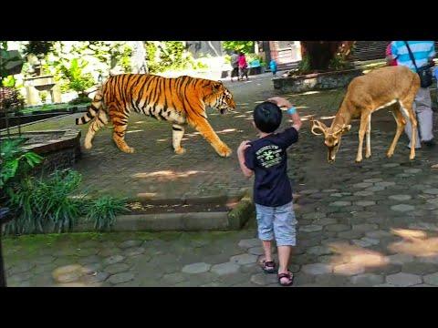 melihat-hewan-lucu-di-kebun-binatang-bandung