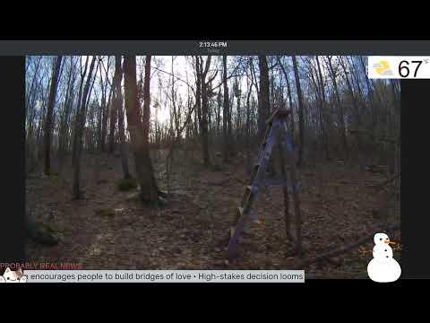 Live Animal Cam W/ Night Vision - Live Stream GHOST CAM