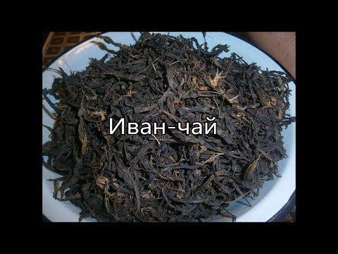 Иван-чай и его полезные свойства - очень русский напиток