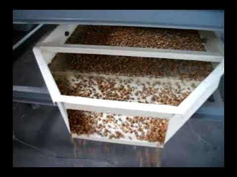 Nuts Macadamia Nut Cashew Hazel Walnut Almond Cracker Machine