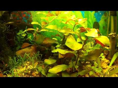 Аквариумистика и рыбалка №38 (что нового в  креветочнике)