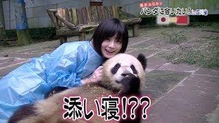 藤岡みなみのパンダを巡る旅、第1弾。四川省雅安のパンダ基地でパンダの...