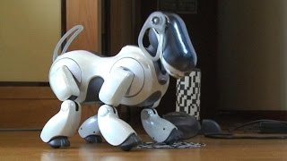 In Japan, robot dogs are for life -- and death