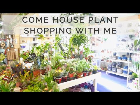 COME HOUSE PLANT SHOPPING WITH ME   October 2019   UK