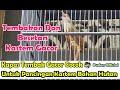 Kapas Tembak Gacor Cocok Untuk Pancingan Kastem Bahan Ngerol Dan Mbeset Panjang  Mp3 - Mp4 Download