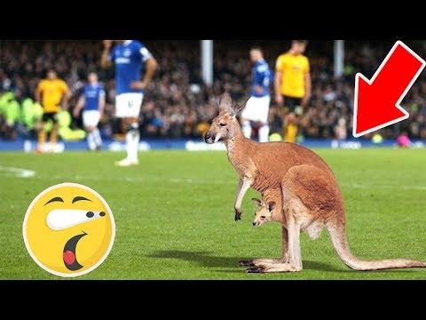 7 Animales Raros Que Ingresaron En El Campo De Fútbol  (PARTE 2)