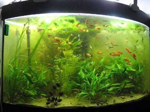 Acquario juwel angolare 180 litri trovato al cassonetto for Acquario per pesci rossi usato