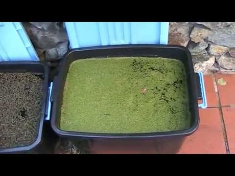 Aquaponics: grow your own fish food