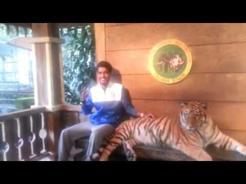 Как фотографироваться с тигром