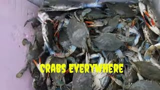 Holy Crabs!