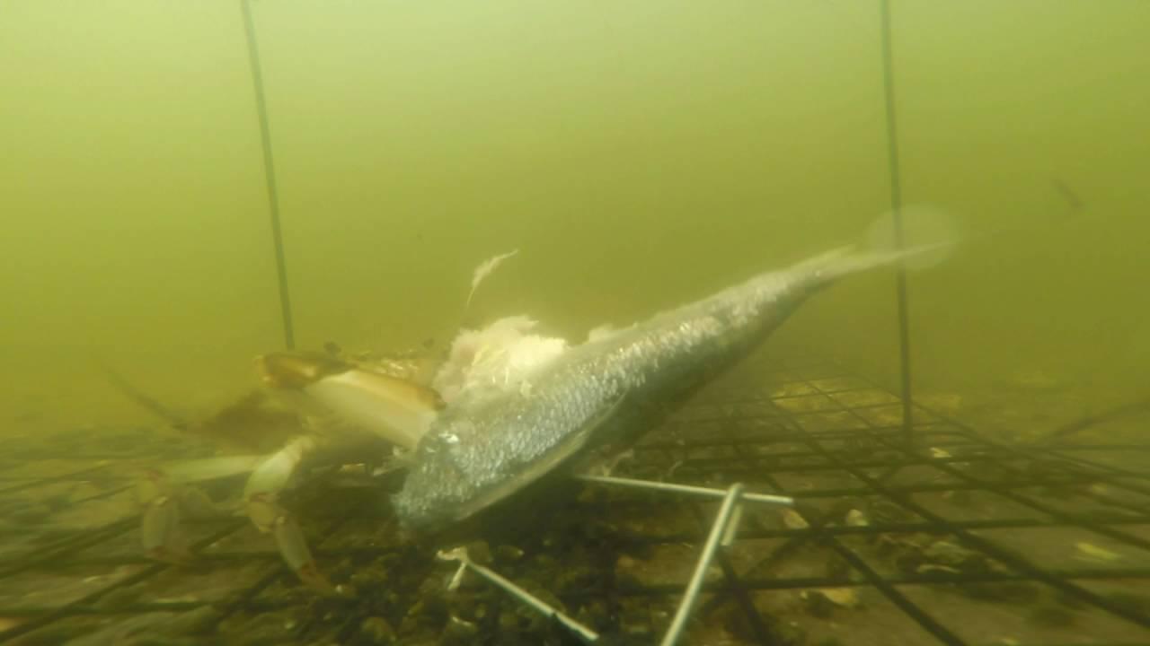 nj crabbing reports