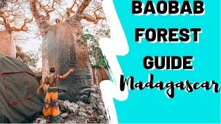 Baobab Forest in Madagascar | In-Depth | How 2 Travelers