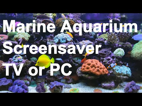★-★-★ AMAZING Marine Aquarium Screensaver ★-★-★