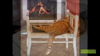 Самые смешные спящие животные!