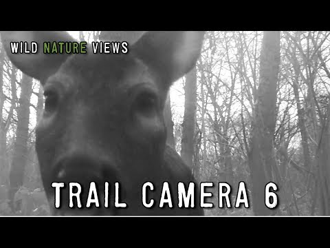 Wildlife on the Trail Camera 6