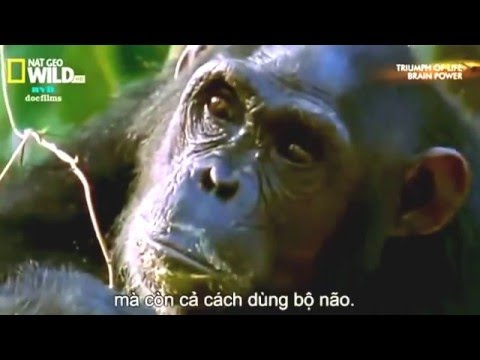 FOREST DOCUMANTARY- I  BRAIN POWER ANIMAL LIFE/ FOREST DISCOVERY ANIMAL