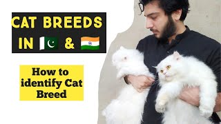 How to Identify Cat Breed | Common Cat Breeds in PAKISTAN and INDIA | Identify types of Persian Cat