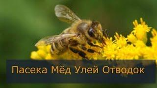 Пчеловодство видео Пчеловодство Отводок(, 2016-02-10T22:39:09.000Z)