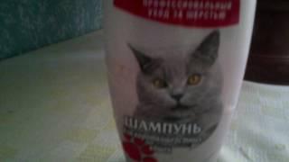 Документальный фильм про Британских кошек