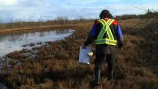Hunting for Mosquitoes in winter-Shaw TV Victoria