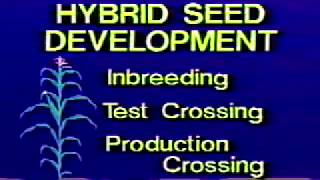 The Hybrid Corn Miracle, 1991