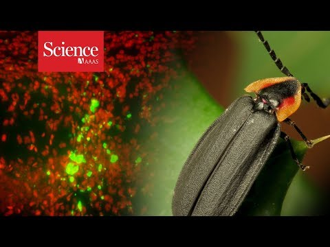 Tracking live cells deep within animals' bodies