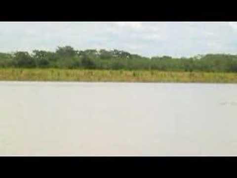 Ucayali River Dolphins (v)