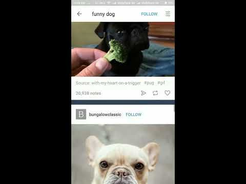 Video Downloader For Tumblr Android