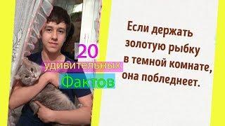 20 УДИВИТЕЛЬНЫХ ФАКТОВ КОТОРЫЕ ЗВУЧАТ КАК ЛОЖЬ!!! | Майрон :3 😯