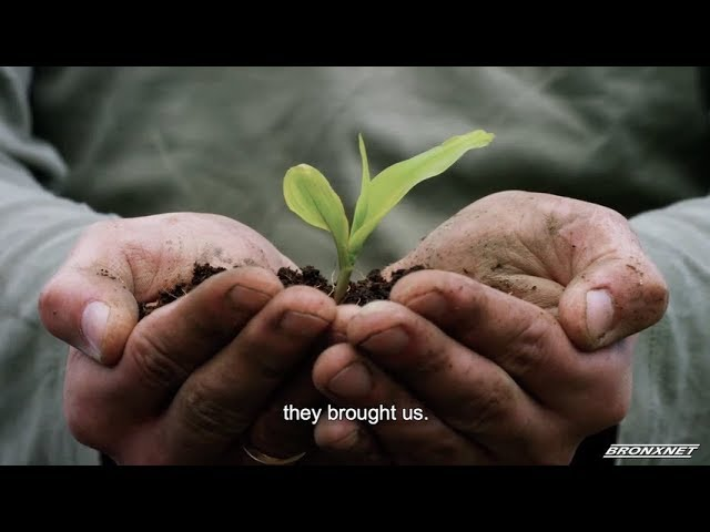 Agriculture | PRVoices