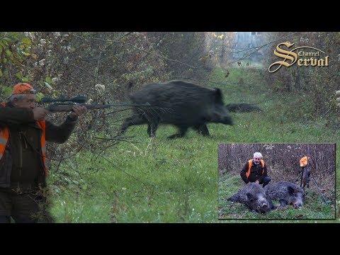 Wild boar driven hunt in Croatia -New season 2017. - Drückjagd  in Kroatien