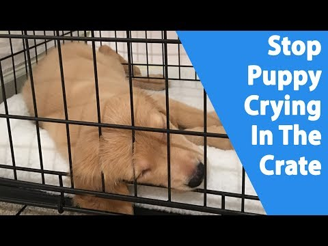 Puppy Crying In The Crate [9 Ways To Stop It]