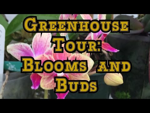OCTOBER GREENHOUSE UPDATE: BLOOMS AND BUDS + THINKING AHEAD TO FALL