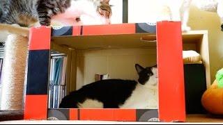 猫2匹と段ボールで作る「ピタ猫スイッチ」が最強に癒やされる