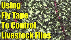 Using Fly Tape To Control Livestock Flies
