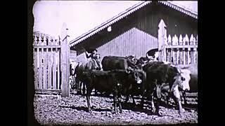 Une Ferme d'Élévage au Brésil / A Livestock Farm in Brazil (1912)