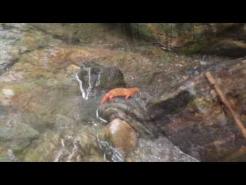 Vermont gold prospecting scouting new spots 2016 gold youtube vermont gold prospecting scouting new spots 2016 gold publicscrutiny Choice Image