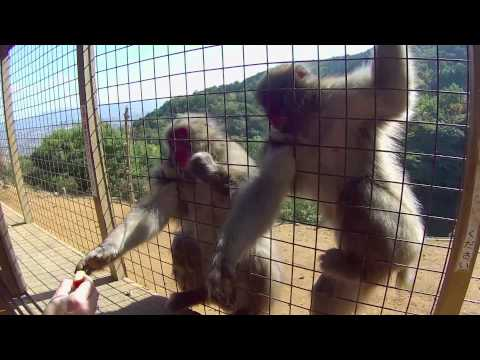 Monkey Park Japan: A Day in the Life