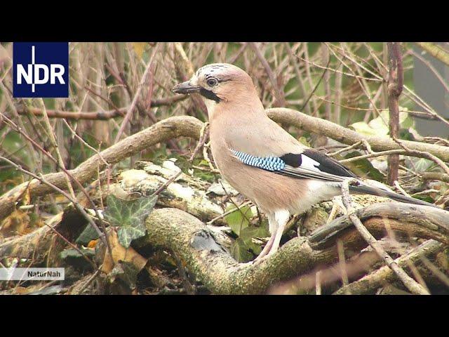 Wie Tiere durch den Winter kommen   NaturNah   NDR Doku