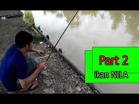 Mancing ikan nila part1 pake umpan pelet udang..