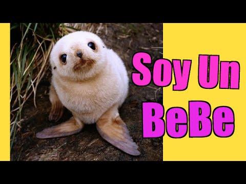 Los bebes animales son muy tiernos videos de animales - Dibujos para sabanitas de bebe ...