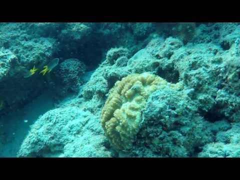 SCUBA Diving In The Andamans - Havelock Island - The Aquarium