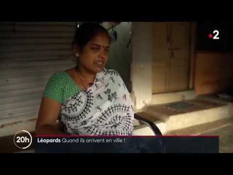À Bombay, des léopards chassent dans les rues la nuit