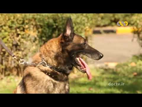 Iran Anti Narcotic Police, Trained Police Dogs unit (SEPCA)