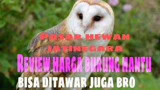 Pasar Hewan Jatinegara - Survei Harga Burung Hantu