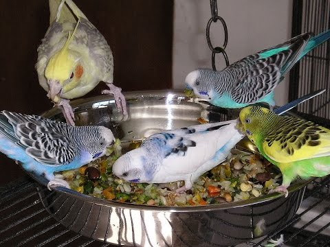 How To Stop Starlings Eating All The Bird Food