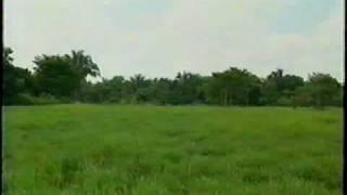 Grupo Papalotla - Mulato